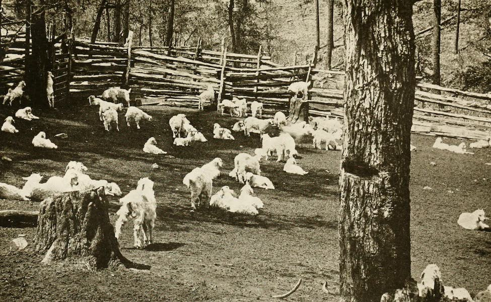 New Mexico, The Land of the Delight Makers - A Goat Ranch in the Lincoln National Forest (1920)