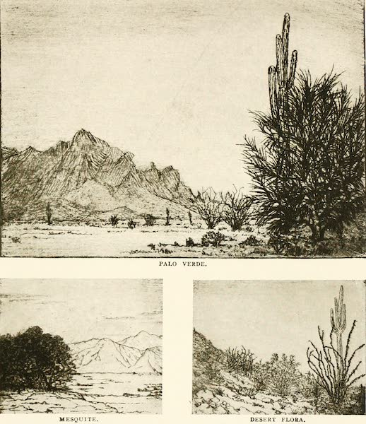 New Mexico, The Land of the Delight Makers - Palo Verde - Mesquite - Desert Flora (1920)