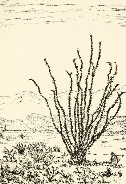 """New Mexico, The Land of the Delight Makers - The """"Ocatillo"""" (1920)"""