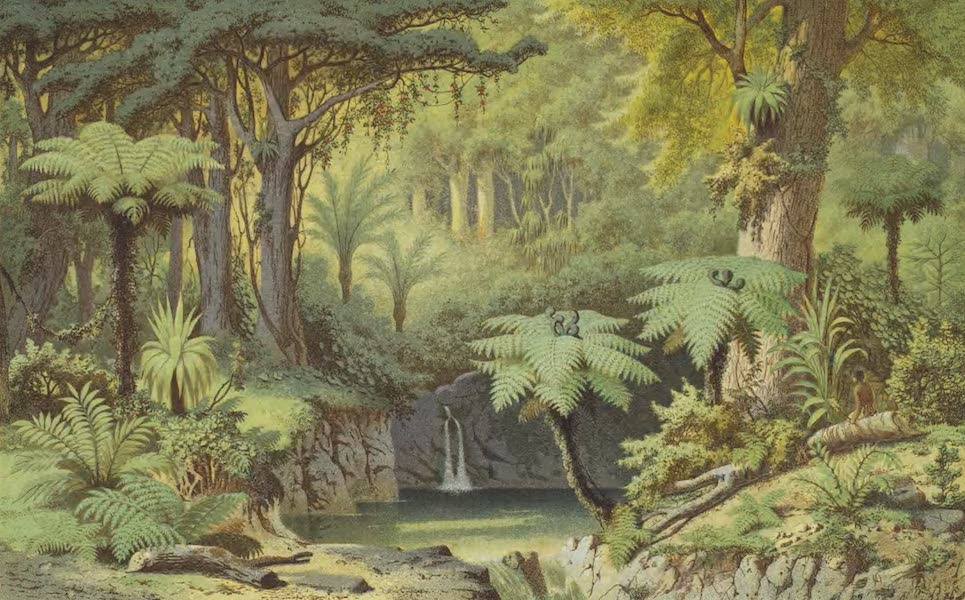 New Zealand : Its Physical Geography, Geology, and Natural History - Forest in the Papakura District, near Auckland (1867)