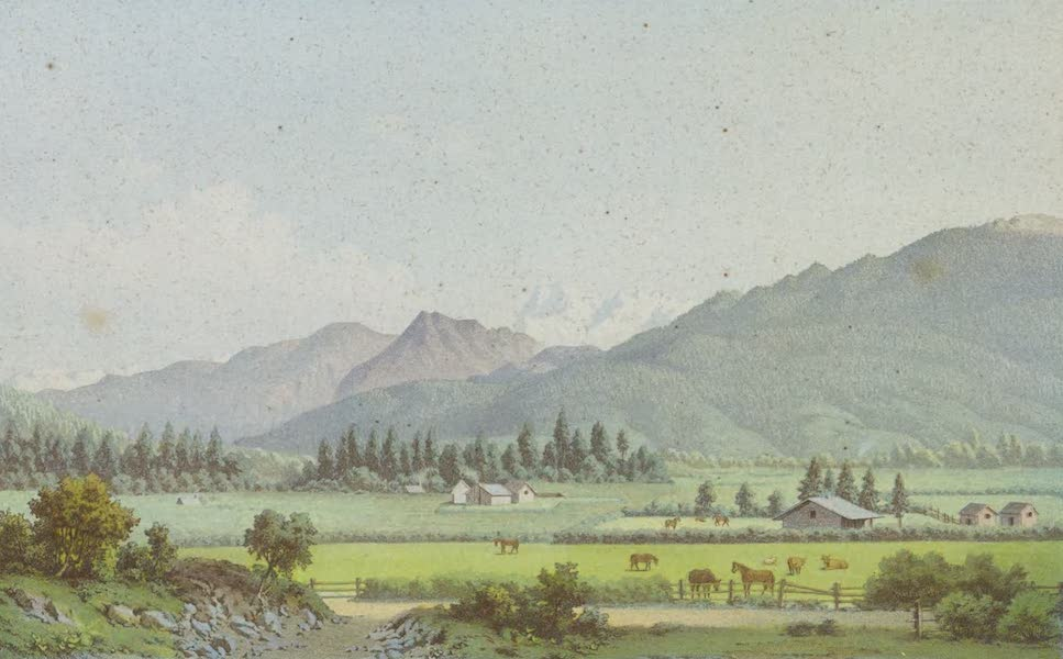 New Zealand : Its Physical Geography, Geology, and Natural History - Motueka Valley near Nelson South Island (1867)