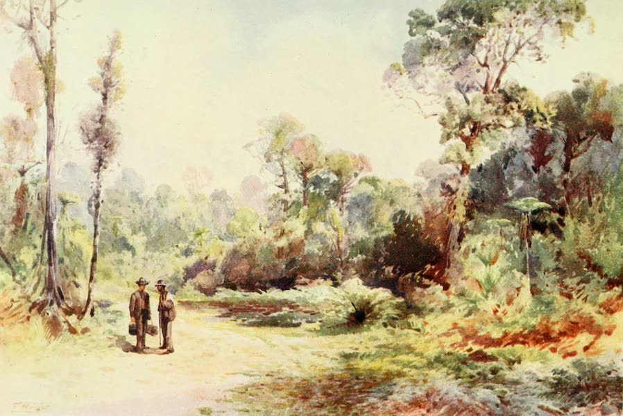 New Zealand, Painted and Described - A Bush Road (1908)