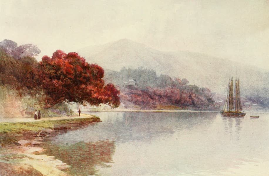 New Zealand, Painted and Described - Pohutukawa in Bloom, Whangaroa Harbour (1908)
