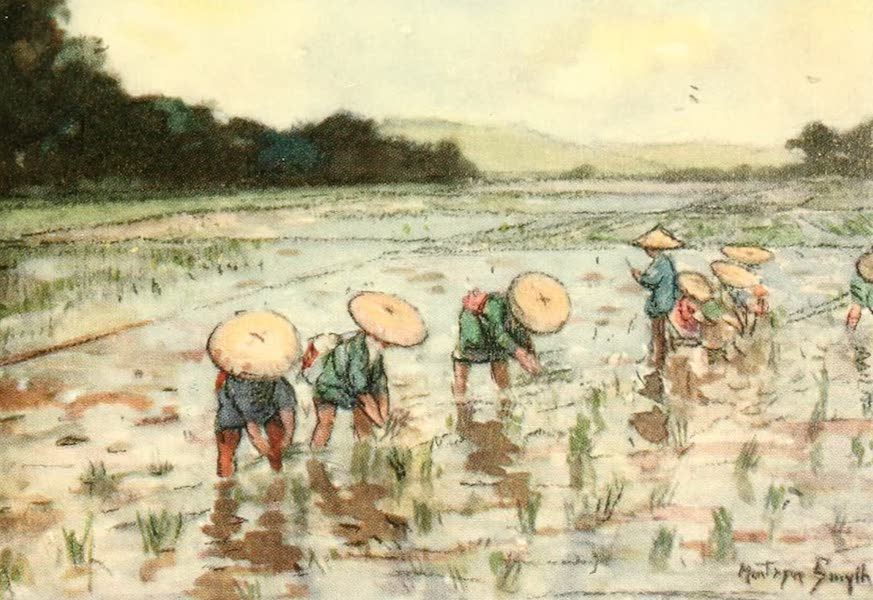 Old and New Japan - Women often stand all day long up to their Knees in Mud planting the Rice (1907)