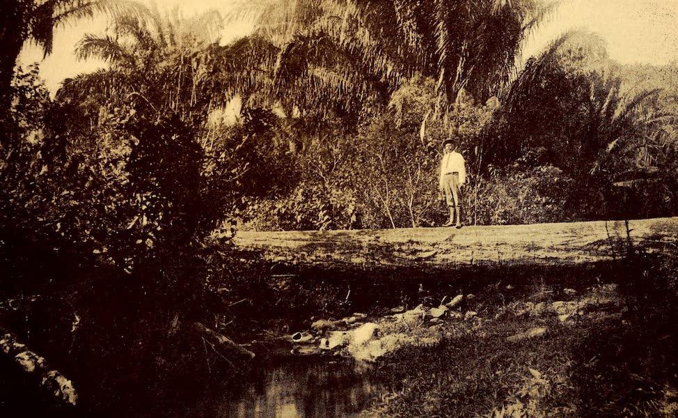 Old Panama and Castilla del Oro - Isthmian jungle (1911)