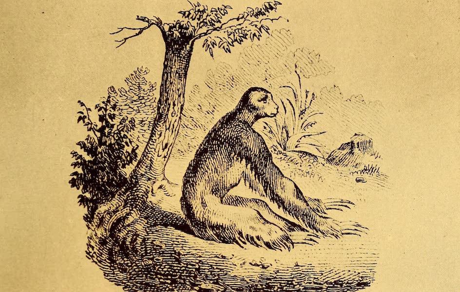 Old Panama and Castilla del Oro - Sloth (1911)