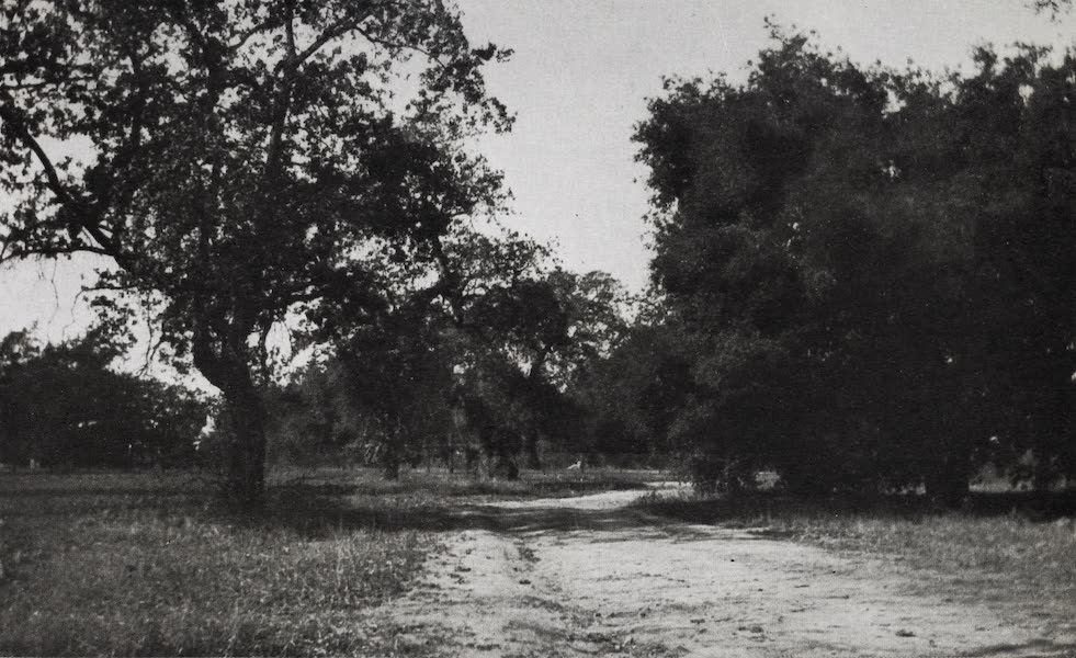 On Sunset Highways - The Baldwin Oaks (1915)