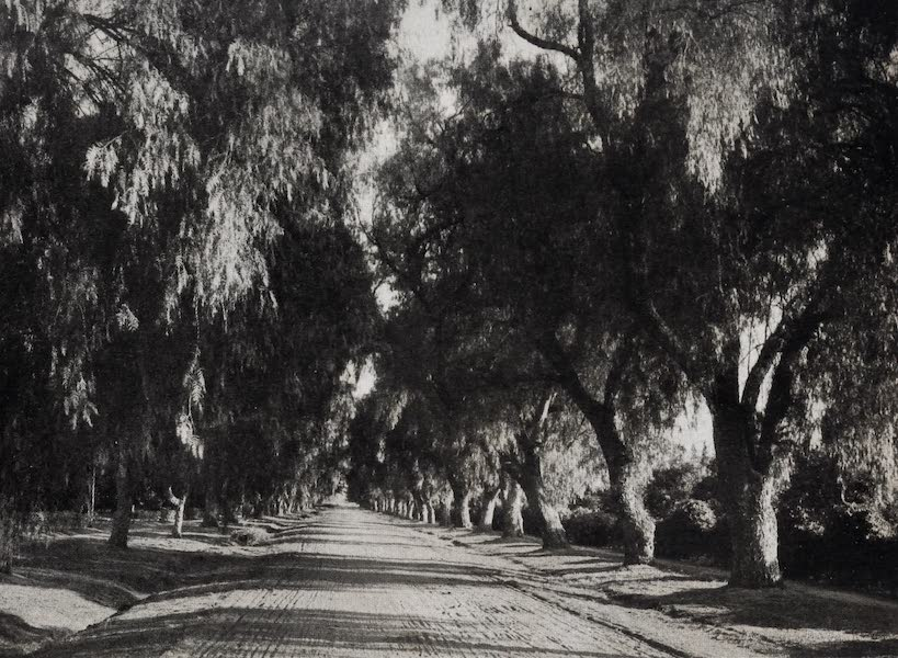 On Sunset Highways - Mangolia Drive, Riverside (1915)