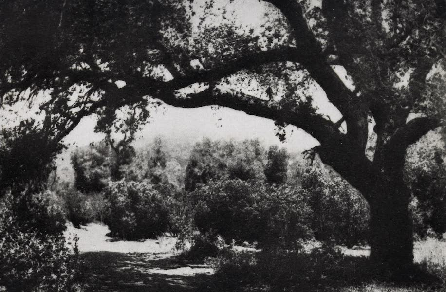 On Sunset Highways - A Back Country Oak (1915)