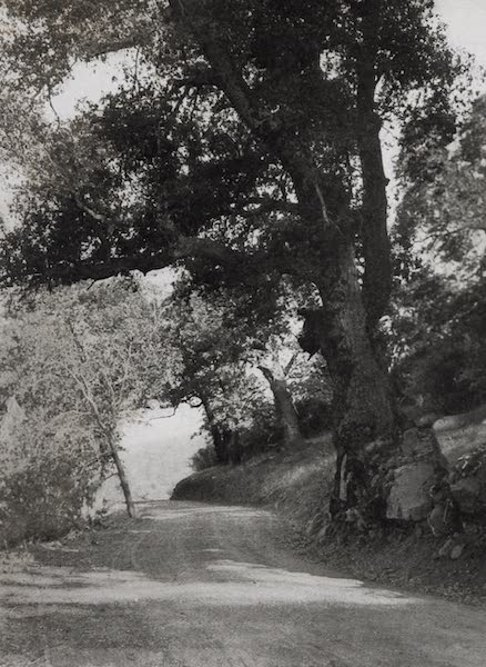 On Sunset Highways - Road to Warner's Hot Springs (1915)