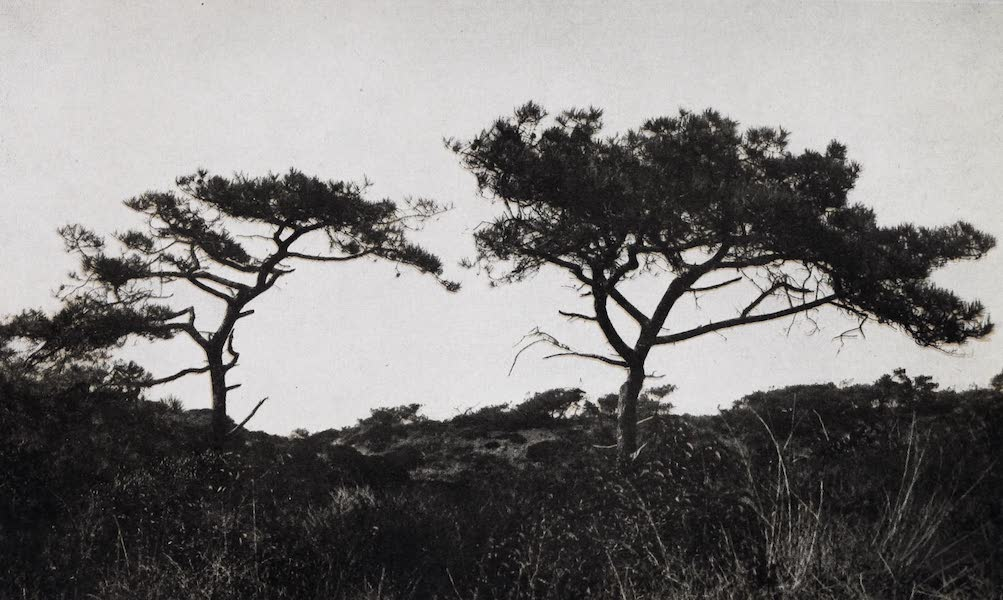 On Sunset Highways - Torrey Pines, near La Jolla (1915)