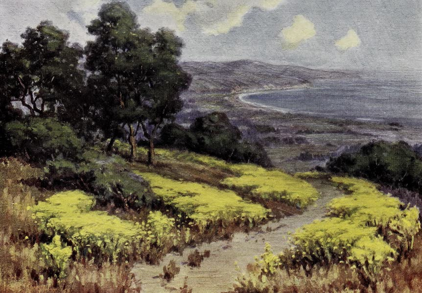 On Sunset Highways - Wild Mustard, Miramar (1915)
