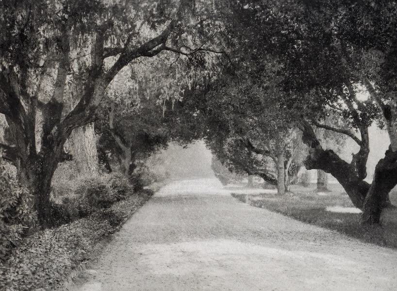 On Sunset Highways - Drive Through Grounds, Del Monte Hotel (1915)