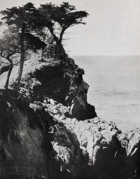 On Sunset Highways - Cypresses, Point Lobos (1915)