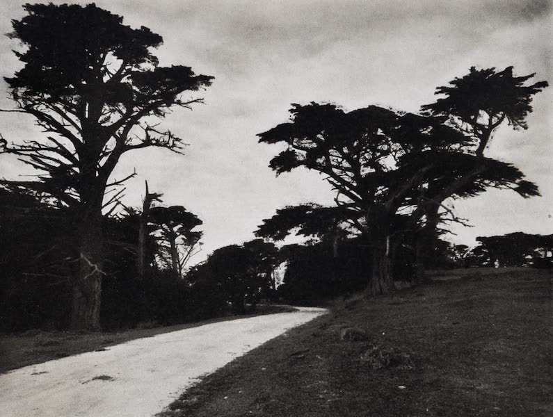 On Sunset Highways - Old Cypresses of the Seventeen-Mile Drive, Monterey (1915)