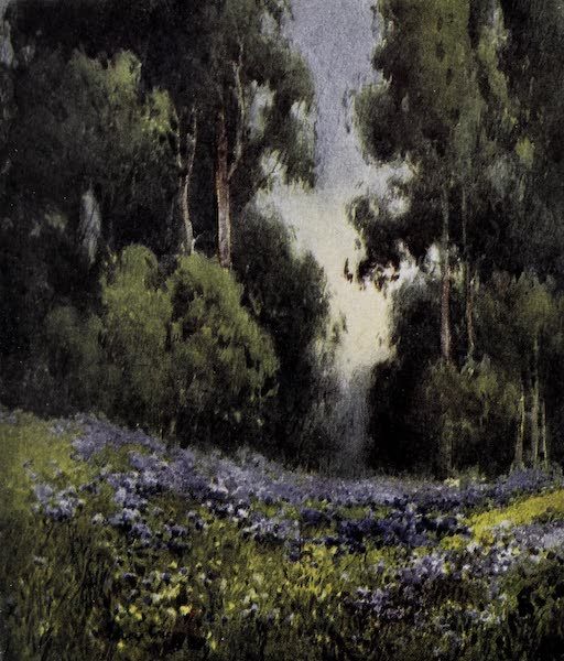 On Sunset Highways - A Forest Glade (1915)