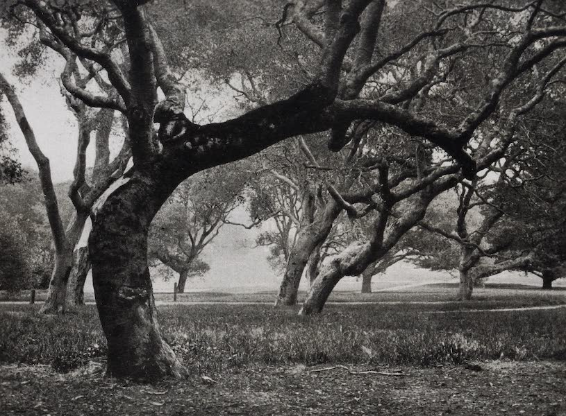 On Sunset Highways - Berkeley Oaks (1915)