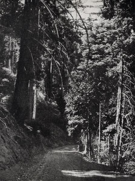 On Sunset Highways - Through Pines and Redwoods (1915)