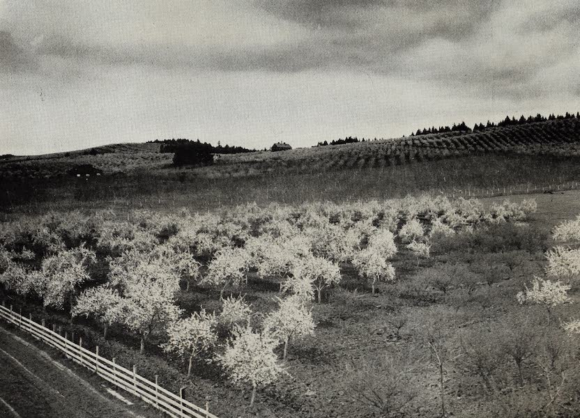 Oregon, the Picturesque - Prune Orchards near Dundee, Oregon, Willamette Valley (1917)