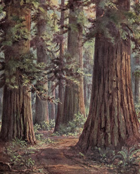 Oregon, the Picturesque - Through the Del Norte Redwoods (1917)