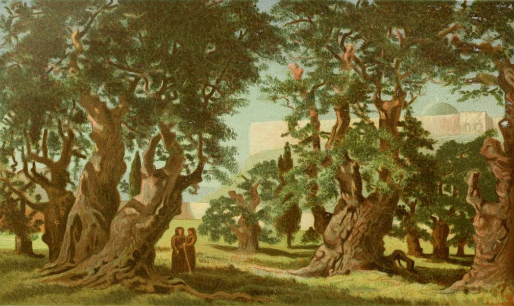 Palestine Illustrated - Gethsemane (1888)