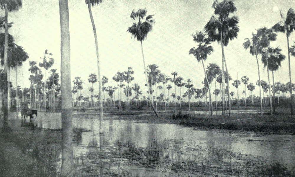 Paraguay by Henry Koebel - A Mild Chaco Flooding (1917)