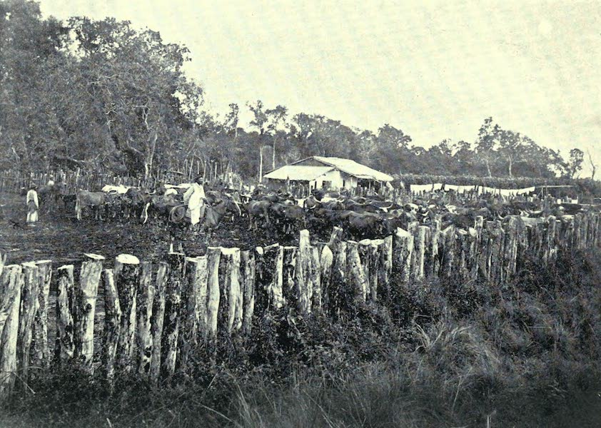 Paraguay by Henry Koebel - A Corral (1917)
