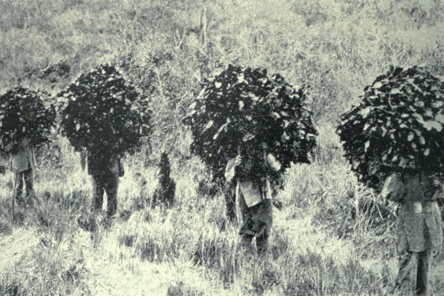 Paraguay by Henry Koebel - Bringing Home Yerba (1917)