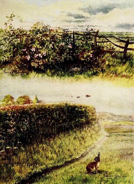 Partridges and Partridge Manors - (1) Good Nesting Ground; (2) Bad Nesting Ground (1911)