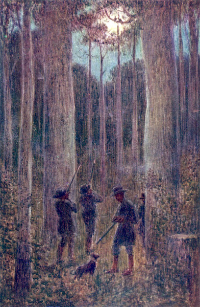 Peeps at Many Lands: Australia - The Australian Forest at Night-
