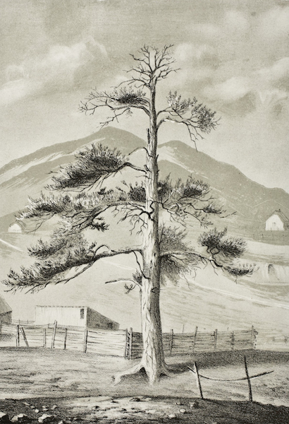 Pencil Sketches of Montana - The Hangman's Tree (1868)