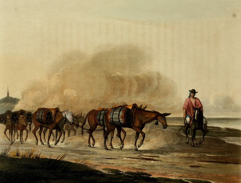 Picturesque Buenos Ayres & Monte Video - Convoy of Wine Mules (1820)