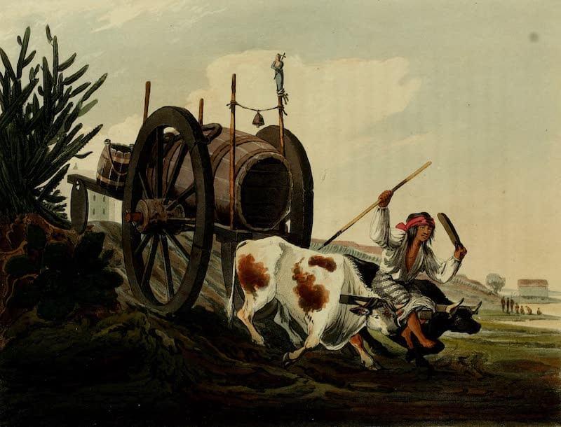 Picturesque Buenos Ayres & Monte Video - Water Cart (1820)