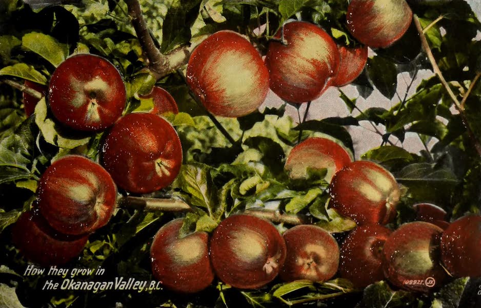Picturesque Okanagan - How they grow in the Okanagan, B.C. (1910)