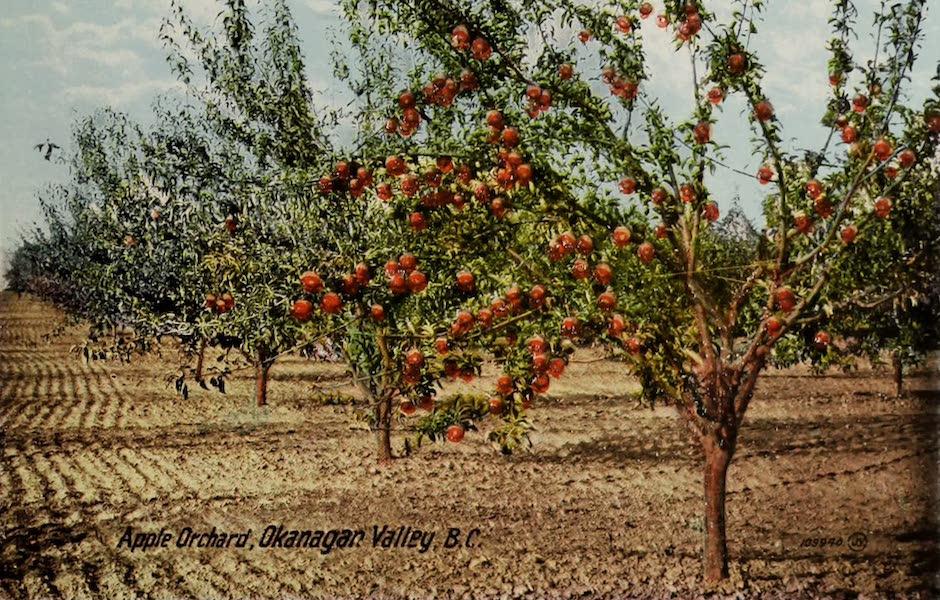 Picturesque Okanagan - Apple Orchard, Okanagan Valley, B.C. (1910)
