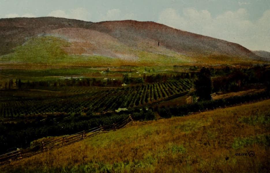 Picturesque Okanagan - Coldstream Orchards, Vernon, B.C. (1910)