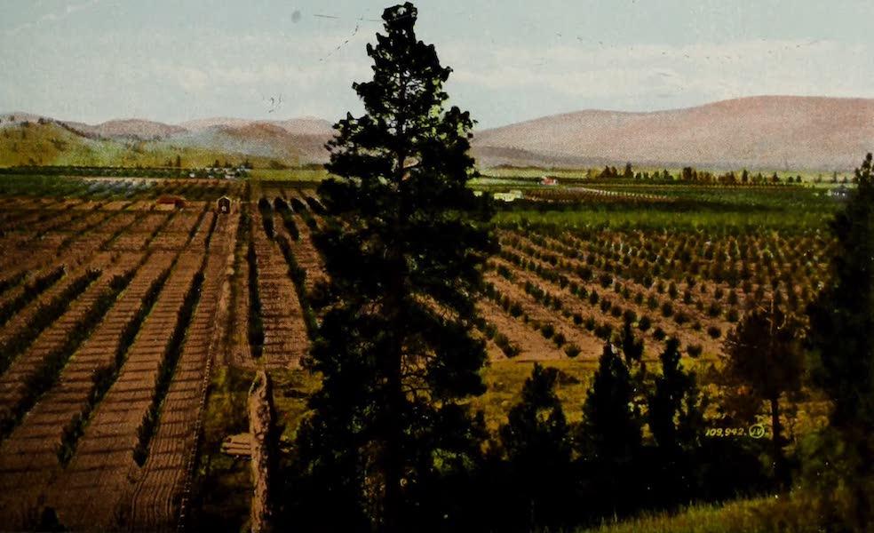 Picturesque Okanagan - View showing magnificent Fruit Ranches, Kelowna, B.C. (1910)
