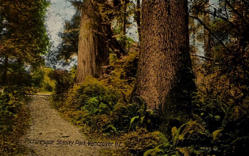 Picturesque Vancouver B.C. - Picturesque Stanley Park, Vancouver, B.C. (1910)
