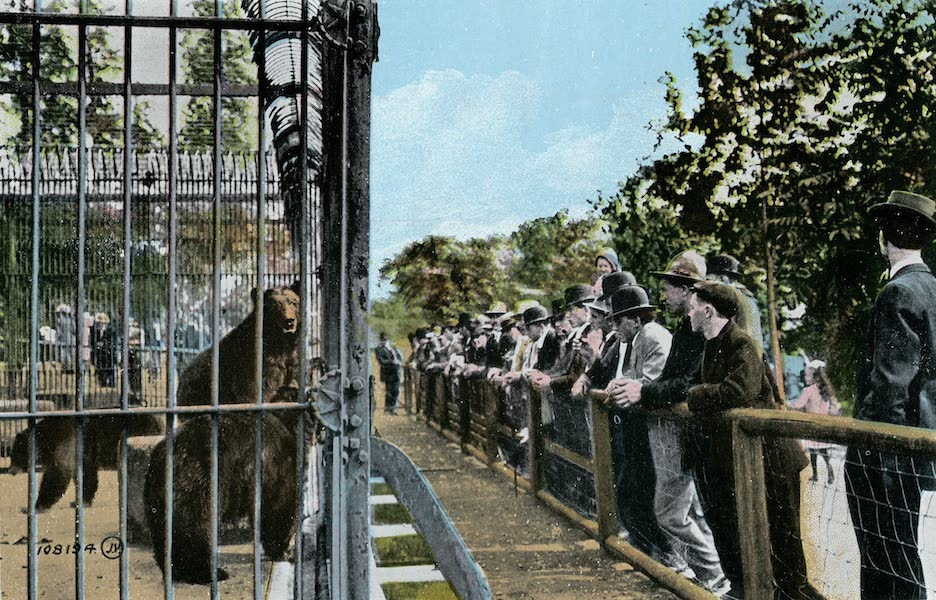 Picturesque Vancouver B.C. - Watching the Bears, Stanley Park (1911)
