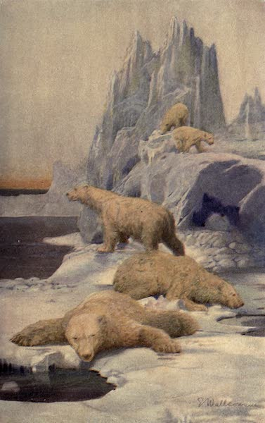Pioneers in Canada - Icebergs and Polar Bears (1912)