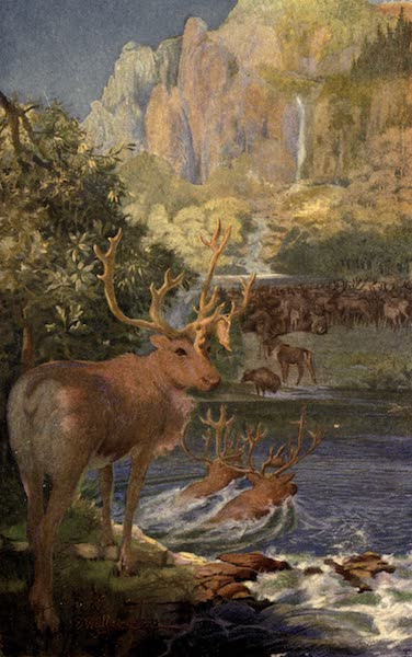 Pioneers in Canada - Caribou Swimming a River (1912)