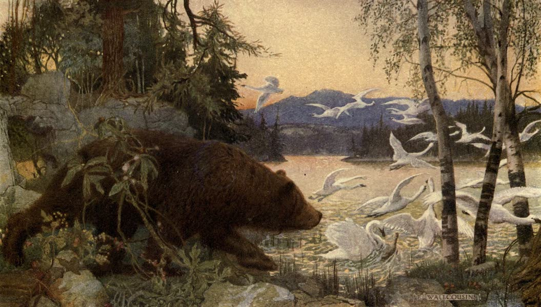 Pioneers in Canada - Scene On Canadian River Wild Swans Flying Up Disturbed By Bear (1912)