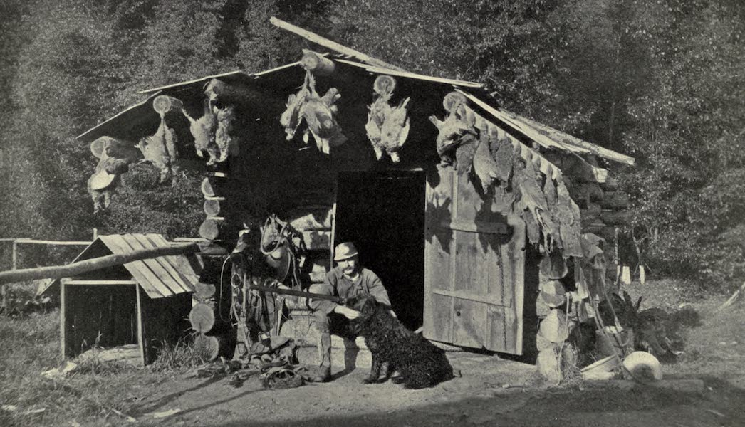 Pioneers in Canada - A Hunters Shack in British Columbia After a Successful Shoot of Blue Grouse (1912)