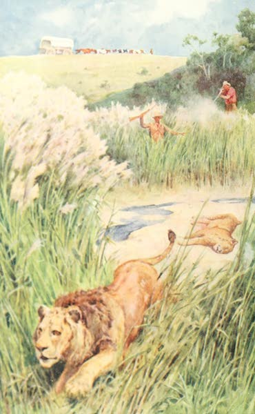 Pioneers in South Africa - The Boers of the Party Boldly Tackled a Lion and Lioness (1914)