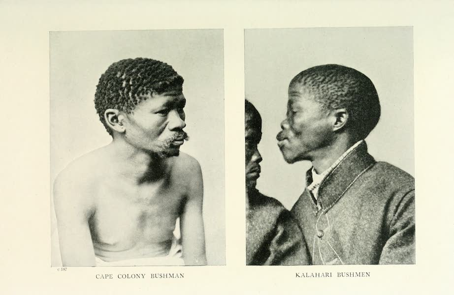 Pioneers in South Africa - Cape Colony Bushman (1914)