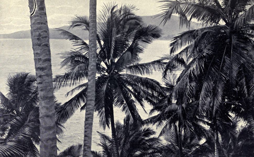 Pioneers in Tropical America - Coconut Palms (1914)