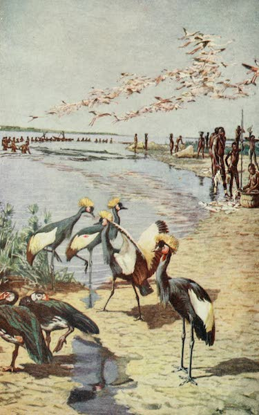 Pioneers in West Africa - The Northern Shores of Lake Chad as Seen By Denham in 1822 (1912)