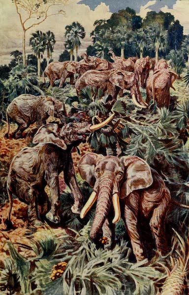 Pioneers in West Africa - Elephants Destroying a Palm Grove (1912)