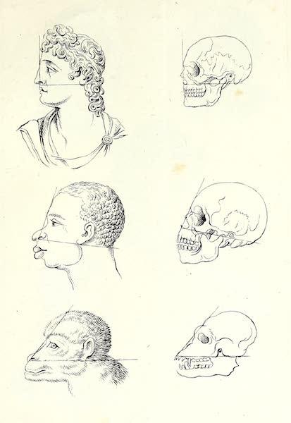 Porte-Feuille Geographique et Ethnographique [Atlas] - Angle facial (1820)
