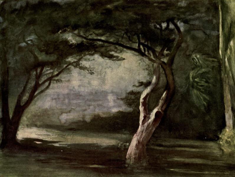 Reminiscences of the South Seas - Trees on Moonlight, Honolulu, Hawaii (1912)